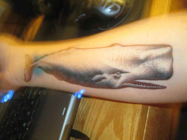 Whale on my forearm. The above tattoo is my newest peice.